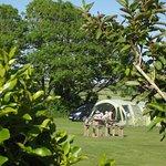 Parkland Caravan and Camping Site Bild