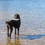 Dizzy Gee at Chittenden Dam