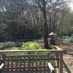 Ashcombe Maze & Lavender Garden