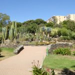 Part of the Cacti garden in the park