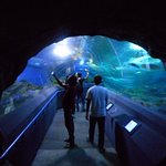 ArghyaKolkata Underwater World, Pattaya-15