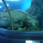 ArghyaKolkata Underwater World, Pattaya-16