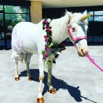 There are Unicorns here...they work in the call center! #CustomerService