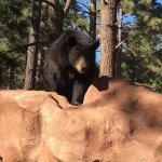 Photo of Bearizona Wildlife Park