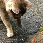 Millie the cat & the elusive Mountain Crawfish