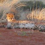 Bagatelle Kalahari Game Ranch Foto