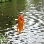 釣れた魚-1