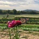Butterflies at Fishkill Farms