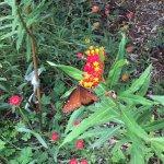 Foto de San Antonio Botanical Garden