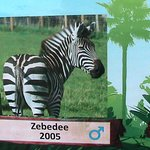 Foto di Noah's Ark Zoo Farm