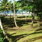 Photo of Hotel Caribbean Coconut