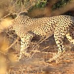 Photo of Thomas Tours & Safaris - Private Day Tours
