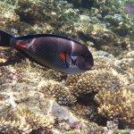 Photo de Sea Club Resort - Sharm el Sheikh