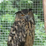 Wise Owl at Animal Adventures