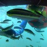 Photo of Ixtapa Island (Isla Ixtapa)