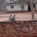Photo of Voi Safari Lodge