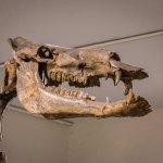 Giant Camel (Gigantocamelus spatulus) Western Nebraska some 3,000,000 years ago.