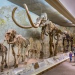 Archie the Mammoth Mammoth in the Hall of Elephant