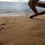 Photo de The Westin Kaanapali Ocean Resort Villas