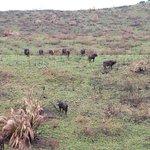 Photo de Parc de la zone humide d'iSimangaliso