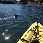 A harbor seal saying hello.