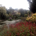 Gooderstone Water Gardens - on a dull, wet afternoon