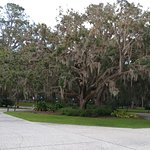 Gorgeous Trees with Spanish Moss