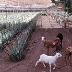 Photo of Aloe Park
