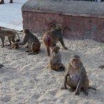 Monkeys Monkeys everywhere
