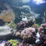 Pictures of the reef and all the fishes that live there..