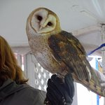 Rescued owl.