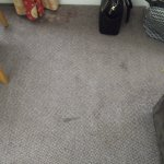 Stains all over carpet