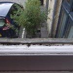 Mould around window frames