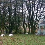 Two Bridges Hotel's resident geese