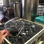 Lusso Della Terra Winery tour