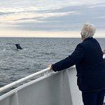 ภาพถ่ายของ Capt Bill & Sons Whale Watch