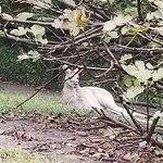 Virginia Zoological Park - October 08 2017
