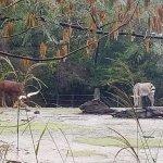 Foto de Virginia Zoo