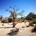 Foto de Joshua Tree National Park