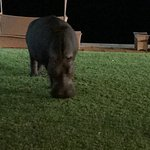 Best hotel in Livingstone, for me, with the hippopotamus, Harry, who comes to have dinner 😍😍😍