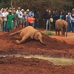 David Sheldrick Wildlife Trust Foto