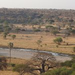 This is the view of the Tarangire River. We could see it from the moment we walked out of our te