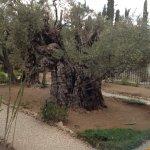 Garden of Gethsamene
