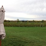 Autumn foliage and vines at Snow Farm Vineyard and Winery