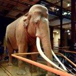Photo de Muséum National d'Histoire Naturelle