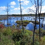 MacGregor Point marsh