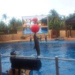 Photo de Happy Hippo Accommodation
