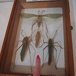 The bugs are BIG in Sabah