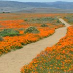 Stay on the paths... protect the poppies and avoid the rattlesnakes.
