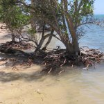 Island walk at high tide shows sea encroachment.